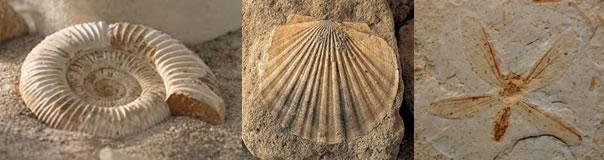 fosilesheader